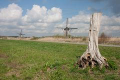 Dutch landscape with tree trunk and windmills Royalty Free Stock Photography