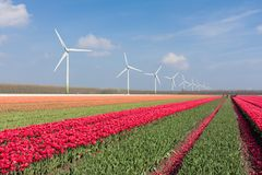 Dutch landscape with tulips and wind turbines Stock Photography