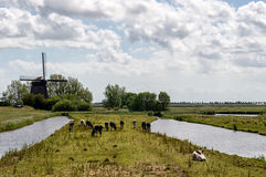 Dutch Landscape Stock Image