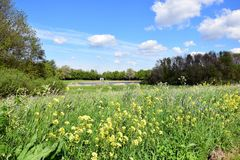Dutch landscape with wild flowers in front. A view over part of a Dutch nature reserve with a small lake, walkingpaths, a petting zoo, midgetgolf and playground stock image