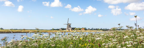 Dutch landscape with windmill and wild flowers Royalty Free Stock Photo
