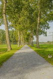 Dutch landscapes Stock Photos