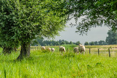 Dutch Landscapes - Baarn - Utrecht Royalty Free Stock Photo