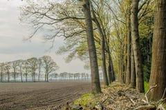 Dutch Landscapes - De Risp - North Brabant Stock Photos