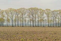 Dutch Landscapes - De Risp - North Brabant Royalty Free Stock Photos