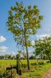 Dutch Landscapes - Maurik - Gelderland Royalty Free Stock Images