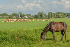 Dutch Landscapes - Oosterwijk - South Holland Stock Photography