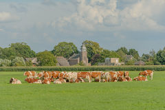 Dutch Landscapes - Oosterwijk - South Holland Stock Photos