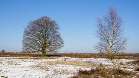 Dutch landscape with a birch and a brown beech Royalty Free Stock Photography