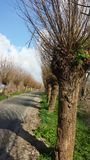 Dutch lane with willow trees on both sides Royalty Free Stock Photography