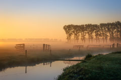 Dutch meadow in foggy sunset. Moody dutch meadow with fences en a ditch Royalty Free Stock Images