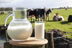 Dutch milk. Milk on wooden plate with cows on the background royalty free stock photography