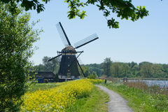Dutch mill in spring. A dutch mill along a small river with yellow rapeseed in the foreground Stock Image