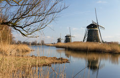 Dutch mills landscape Royalty Free Stock Photo