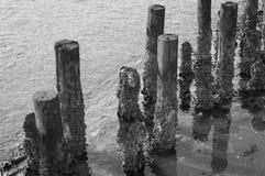 Dutch mud flats Stock Photography