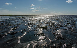 Dutch mud flats Royalty Free Stock Image