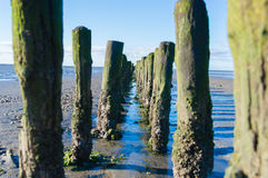 Dutch mud flats. Coastal Feature of the dutch mud flats royalty free stock image