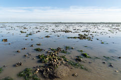 Dutch mud flats Royalty Free Stock Images