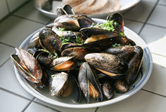 Dutch mussels Stock Image