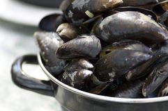 Dutch Mussels Royalty Free Stock Photography
