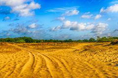 Dutch National Park Loonse en Drunense Duinen  on a hot summer d. Image in dramatized colors of a desert-like Dutch landscape with yellow drift sand and some Stock Photos