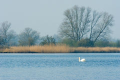 Dutch nature in Biesbosch Royalty Free Stock Photography
