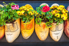 Dutch old wooden clogs with blooming flowers Royalty Free Stock Photo