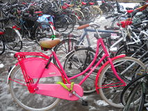 Dutch Oma Bike( Pink Grandmama  Bike). Classic dutch ladies bike parked in the bicycle parking in limburg ,netherlands Stock Photos