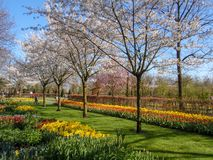 Dutch park with blossoming trees and tulips royalty free stock photos