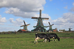 The Dutch pastoral Royalty Free Stock Photo