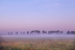 Dutch pasture at sunrise Stock Image
