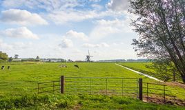Dutch polder landscape with a grazing cows in the meadow. Typical Dutch polder landscape with a grazing cows in the meadow. An iron gate is in the foreground an stock images