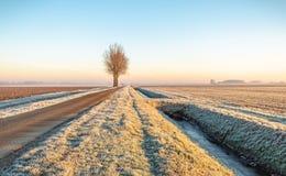Dutch polder landscape in the winter season royalty free stock image