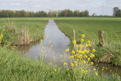 Dutch polder landscpae in springtime Royalty Free Stock Photo