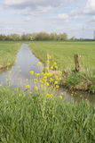 Dutch polder landscpae in springtime Stock Photography