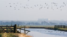 Dutch polderlandscape with birds Stock Images