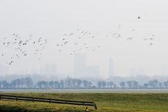 Dutch polderlandscape with waterbirds Stock Photography
