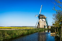Dutch Poldermolen (mill) near tulip fields. Stock Photos