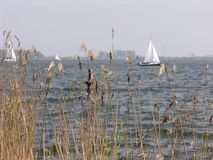 Dutch reed. Reed with sailboat Royalty Free Stock Photo