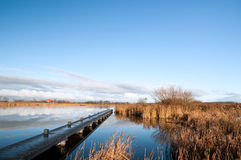 Dutch river with jetty and reed at the side Stock Image