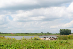 Dutch river landscape Royalty Free Stock Images