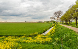 Dutch rural landscape in the spring season Stock Photo