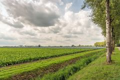 Picturesque Dutch rural landscape with arable farming. Dutch rural landscape on a sunny and cloudy day at the end of the summer season. Sugar beet and red stock photos