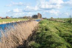 Dutch rural landscape in winter stock photos