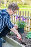 Dutch senior woman plants pot plant in garden royalty free stock images