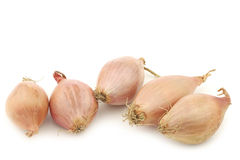 Dutch shallots Stock Images