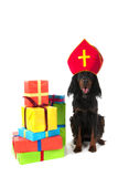 Dutch Sinterklaas dog Stock Photos