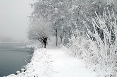 Dutch snow landscape with lake and trees Royalty Free Stock Photography