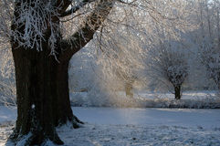 Dutch snow trees with frozen ditch and sun Royalty Free Stock Images