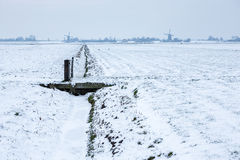 Dutch snowy farmland with windmills. Royalty Free Stock Photo